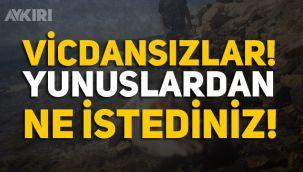 İzmir'de yunusları vurdular!