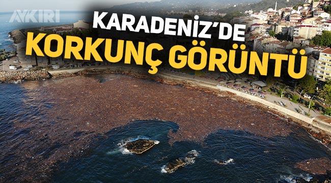 Giresun'daki sel felaketinin şiddeti Tirebolu sahilinde ortaya çıktı: Ağaç kütükleri denizi kapladı