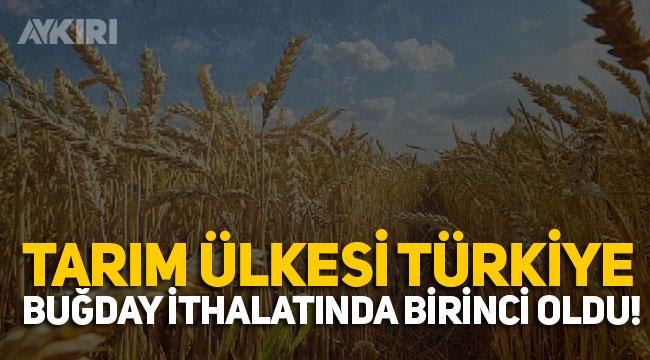 Türkiye buğday ithalatında yine birinci oldu