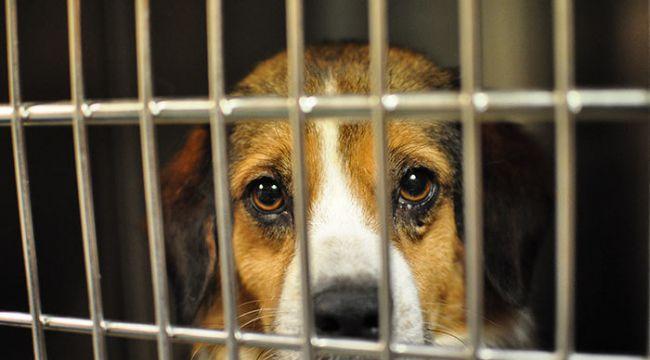 Beşiktaş Belediyesi evcil hayvan ticareti yapılmasını resmen yasakladı