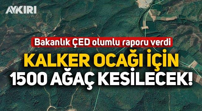 Bakanlık ÇED olumlu raporu verdi: Sakarya'da kalker ocağı için 1500 ağaç kesilecek