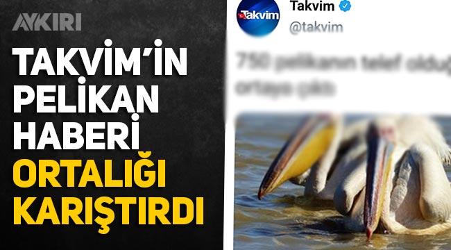 """Takvim'in pelikan haberi ortalığı karıştırdı: """"750 pelikanın telef olduğu ortaya çıktı"""""""