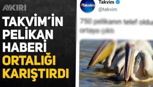 Takvim'in pelikan haberi ortalığı karıştırdı: