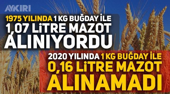 Buğday ekim alanları 15 yılda yok oldu: 24,5 milyon hektar alana ekim yapılamıyor