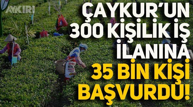 ÇAYKUR'un 300 kişilik mevsimlik işçi ilanına 35 bin 412 kişi başvuru yaptı!