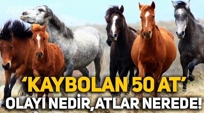Kaybolan 50 at olayı nedir? 50 at nerede? İBB'nin MHP'li belediyeye hibe ettiği atlar kayboldu!