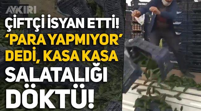 """Antalya'da çiftçi, """"Mal para yapmıyor"""" dedi, kasa kasa salatalığı kamyondan aşağı döktü"""