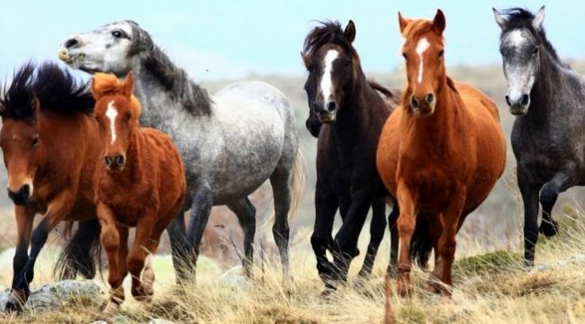 İBB'den '978 at kayıp' iddiaları hakkında açıklama