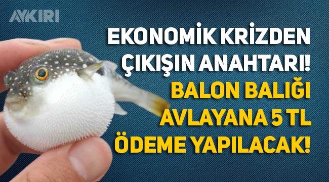 Resmi gazetede yayınlandı: Balon Balığı avlayanlara 5 TL ödenecek!