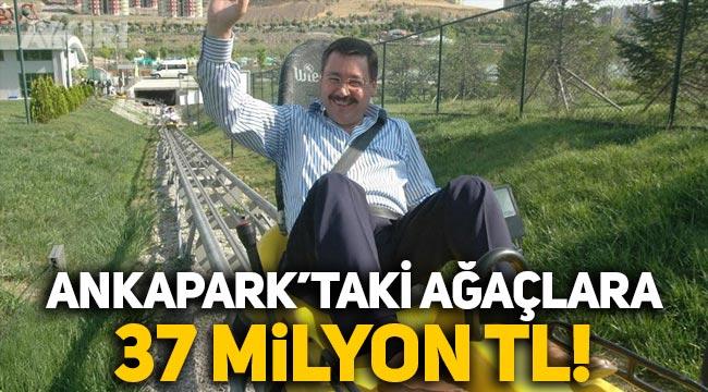 Ankapark'taki ağaç ve çalılar için 37 milyon TL ödenmiş