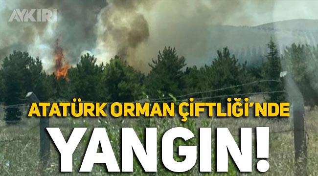 Atatürk Orman Çiftliği'nde yangın! Kundaklama iddiasıyla 1 kişi gözaltına alındı