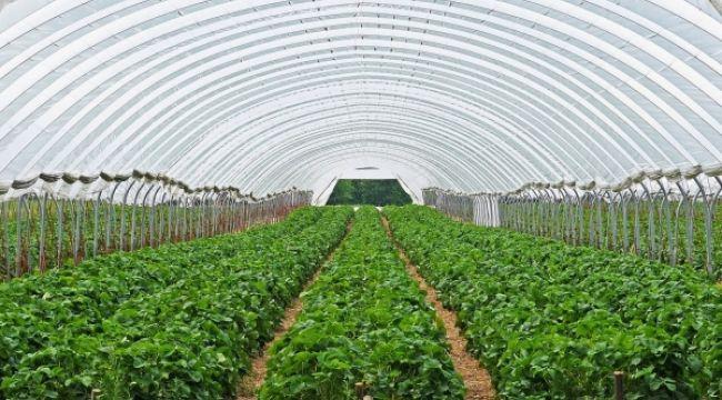 Bilinçsizce kullanılan tarım ilaçları seralara büyük zarar veriyor