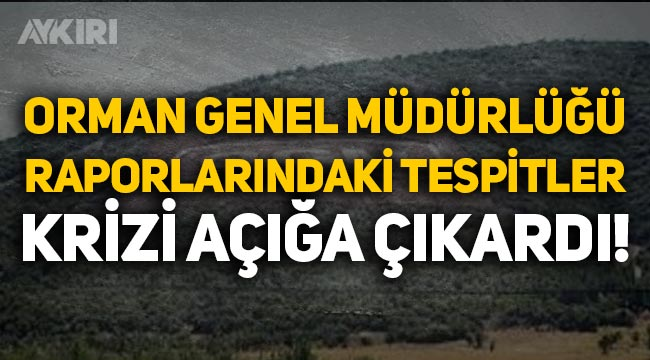 Orman Genel Müdürlüğü raporlarındaki tespitler krizi açığa çıkardı!