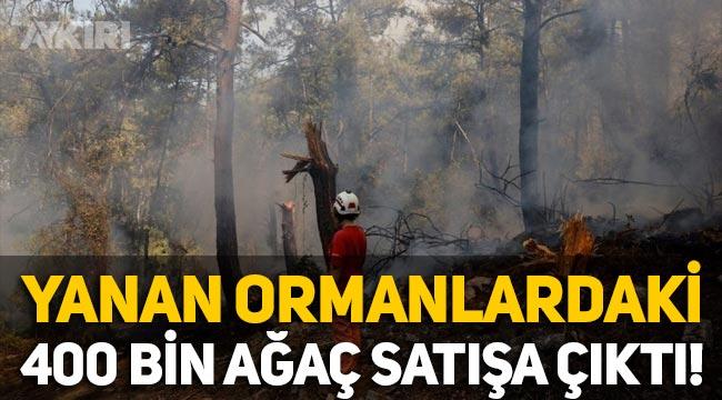 Orman yangınlarında yanan 404 bin ağaç satışa çıktı!