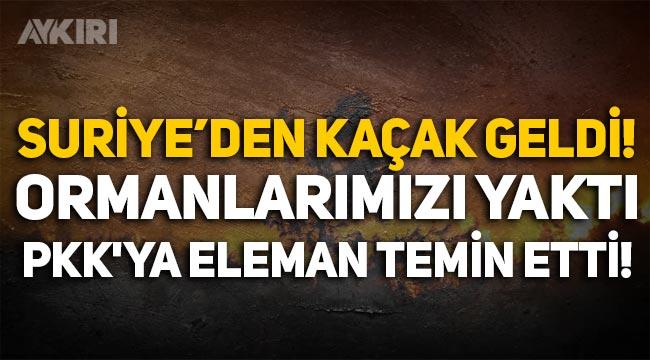 Suriye'den Adana'ya kaçak geldi, ormanlarımızı yaktı, PKK'ya eleman temin etti!
