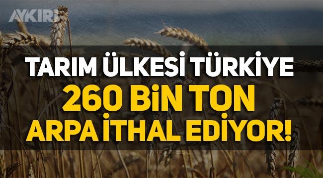 Tarım ülkesi Türkiye 260 bin ton arpa ithal ediyor!